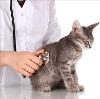 Ветеринарные клиники в Белом Яре